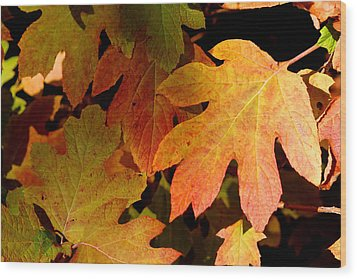 Autumn Hues Wood Print by Living Color Photography Lorraine Lynch
