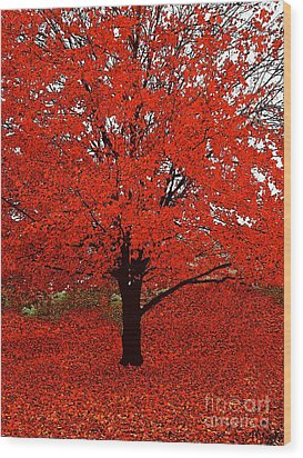Red Tree Impressions #1 Red Wood Print by Saundra Myles