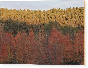 Autumn In Arcadia Wood Print by Sheryl Burns