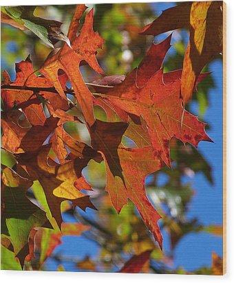 Autumn In Australia Wood Print by Margaret Saheed
