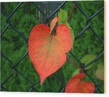 Autumn In July Wood Print by RC deWinter