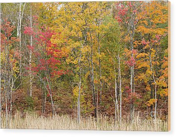 Autumn In Muskoka Wood Print by Les Palenik