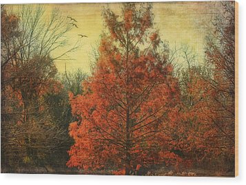 Autumn In Texas Wood Print