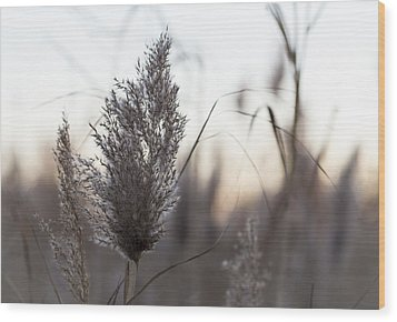 Wood Print featuring the photograph Autumn In The Tall Grass by Andrew Pacheco