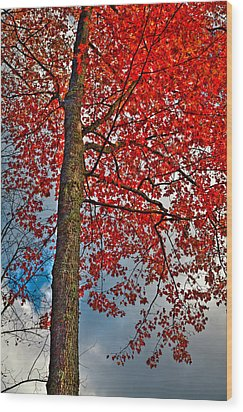 Autumn In The Trees Wood Print by David Patterson