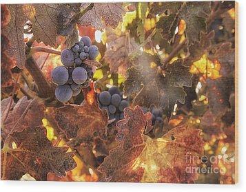Autumn In The Vineyard Wood Print