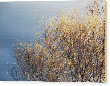 Autumn Is Leaving Wood Print by Gwyn Newcombe
