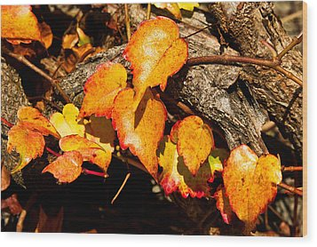 Autumn Ivy Wood Print by Crystal Hoeveler