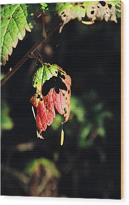 Wood Print featuring the photograph Autumn Leaf by Cathy Mahnke