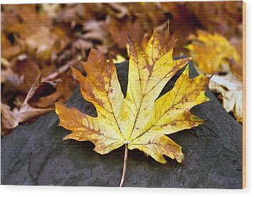 Autumn Leaf Wood Print by Crystal Hoeveler