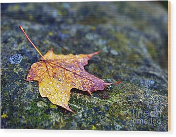 Autumn Leaf On Rocky Ledge Wood Print by Terri Gostola