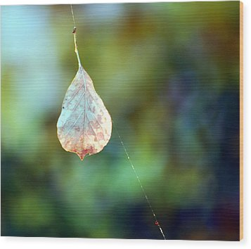 Wood Print featuring the photograph Autumn Leaf Suspended by Linda Cox