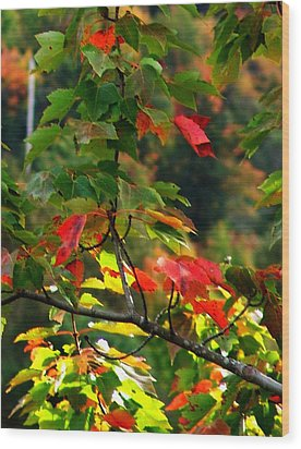 Autumn Leaves At St. Ann's Bay Wood Print by Janet Ashworth