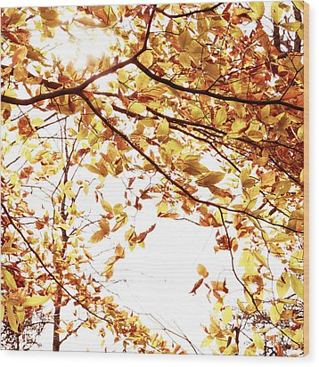 Autumn Leaves Wood Print by Blink Images