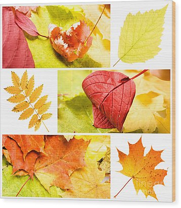 Autumn Leaves Wood Print by Boon Mee