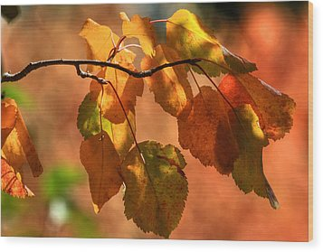 Autumn Leaves Wood Print by Donna Kennedy