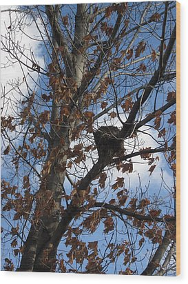 Autumn Leaves Wood Print by Guy Ricketts