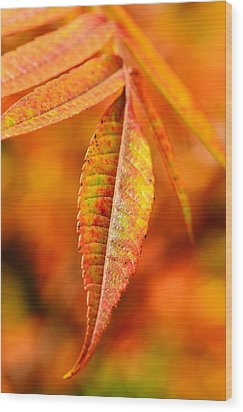 Autumn Leaves Wood Print by Gynt