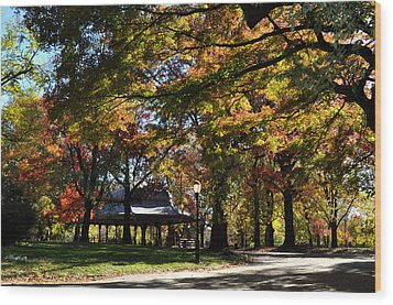 Autumn Leaves In Prospect Park Wood Print by Diane Lent