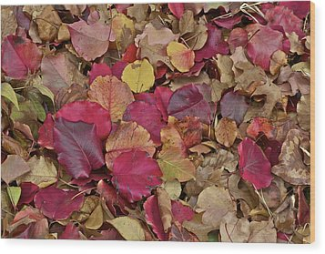 Wood Print featuring the photograph Autumn Leaves by John Babis