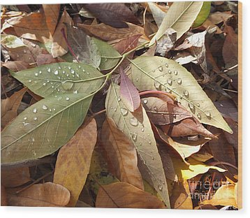 Autumn Leaves Wood Print by  Marcus Maiden