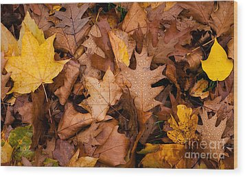 Wood Print featuring the photograph Autumn Leaves by Matt Malloy