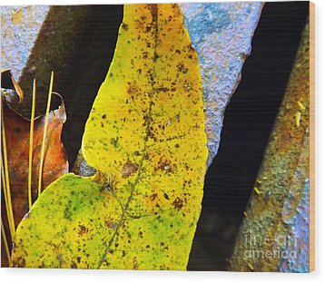 Autumn Leaves Wood Print by Robyn King