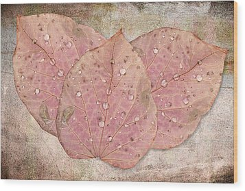 Autumn Leaves With Water Drops  Wood Print by Angela A Stanton