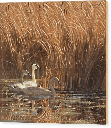 Wood Print featuring the digital art Autumn Light- Trumpeter Swans by Aaron Blaise