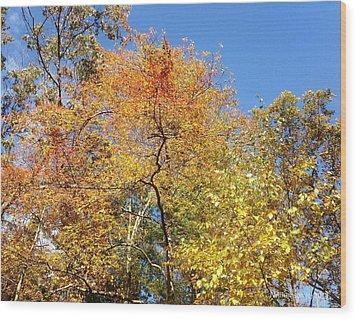 Wood Print featuring the photograph Autumn Limbs by Jason Williamson