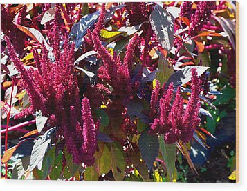 Autumn Magenta Jewel Alstede Farm Wood Print
