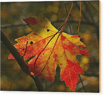 Autumn Maple Leaf Wood Print