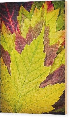 Autumn Maple Leaves Wood Print by Adam Romanowicz