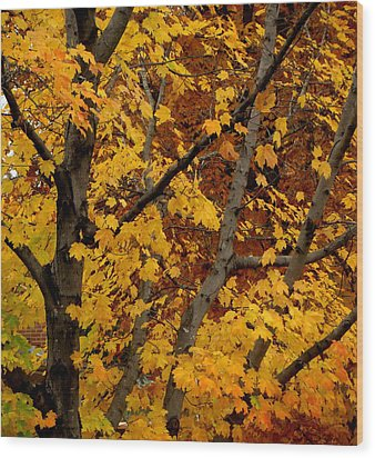 Autumn Moods 21 Wood Print by Rodney Lee Williams