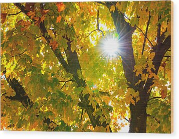 Autumn Morn Wood Print by Dee Dee  Whittle