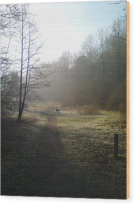 Autumn Morning 4 Wood Print by David Stribbling