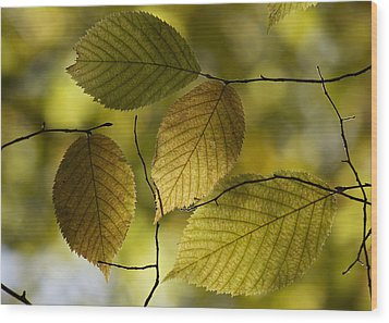 Autumn Mosaic Wood Print by Penny Meyers