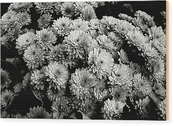 'autumn Mums' Wood Print