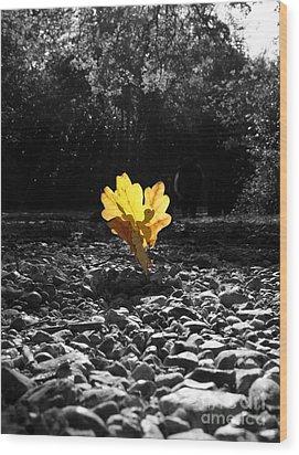 Autumn Oak Isolations Wood Print by Terri Waters