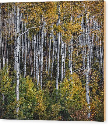 Wood Print featuring the photograph Autumn On Mcclure Pass by Ken Smith