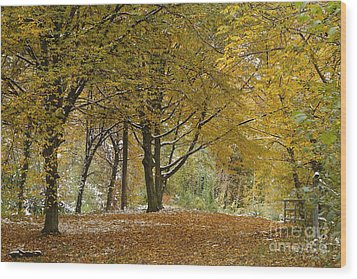 Wood Print featuring the photograph autumn on Moenchsberg in Salzburg by Rudi Prott