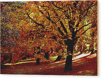 Wood Print featuring the photograph Autumn On Wombat Hill II by Chris Armytage