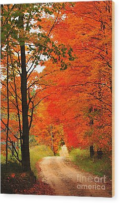 Autumn Orange 2 Wood Print by Terri Gostola