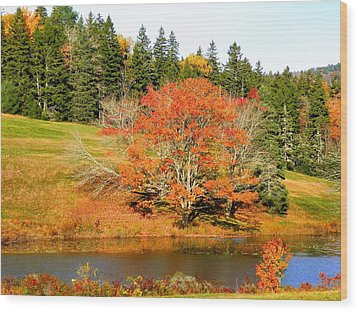 Wood Print featuring the photograph Autumn Orange by Gene Cyr