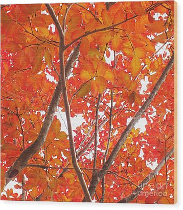 Autumn Orange Wood Print by Scott Cameron