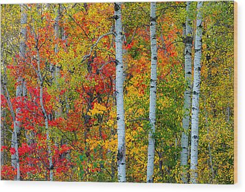 Autumn Palette Wood Print by Mary Amerman