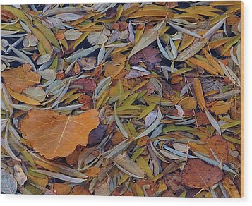 Autumn Palette Wood Print by Steven Milner