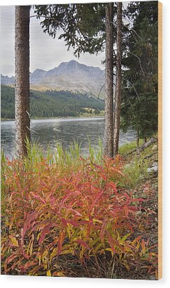 Autumn Quandry Wood Print by Morris  McClung
