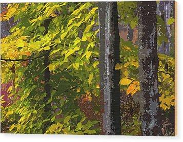 Autumn  Wood Print by Randy Pollard