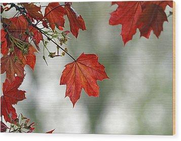Autumn Red Wood Print by Karol Livote
